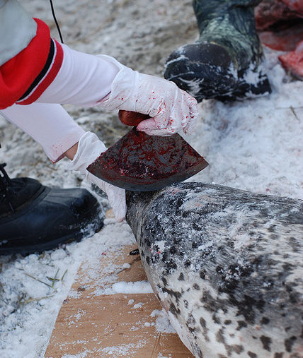 Fun Fact: How to Butcher Spotted Seals