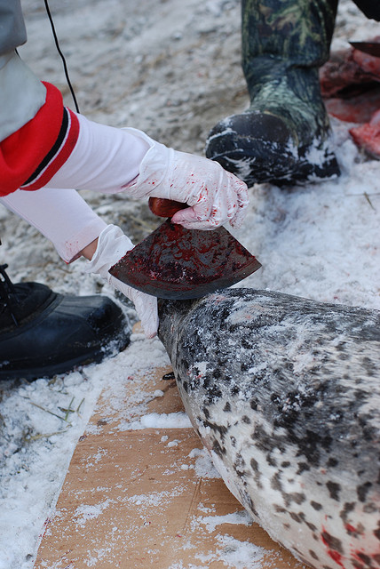 butchering seals