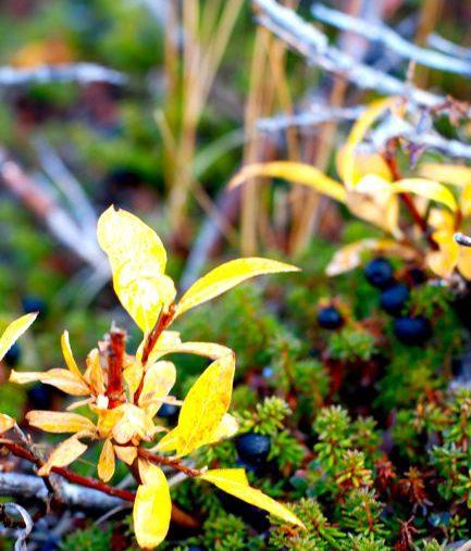Field Trip: Berry Picking