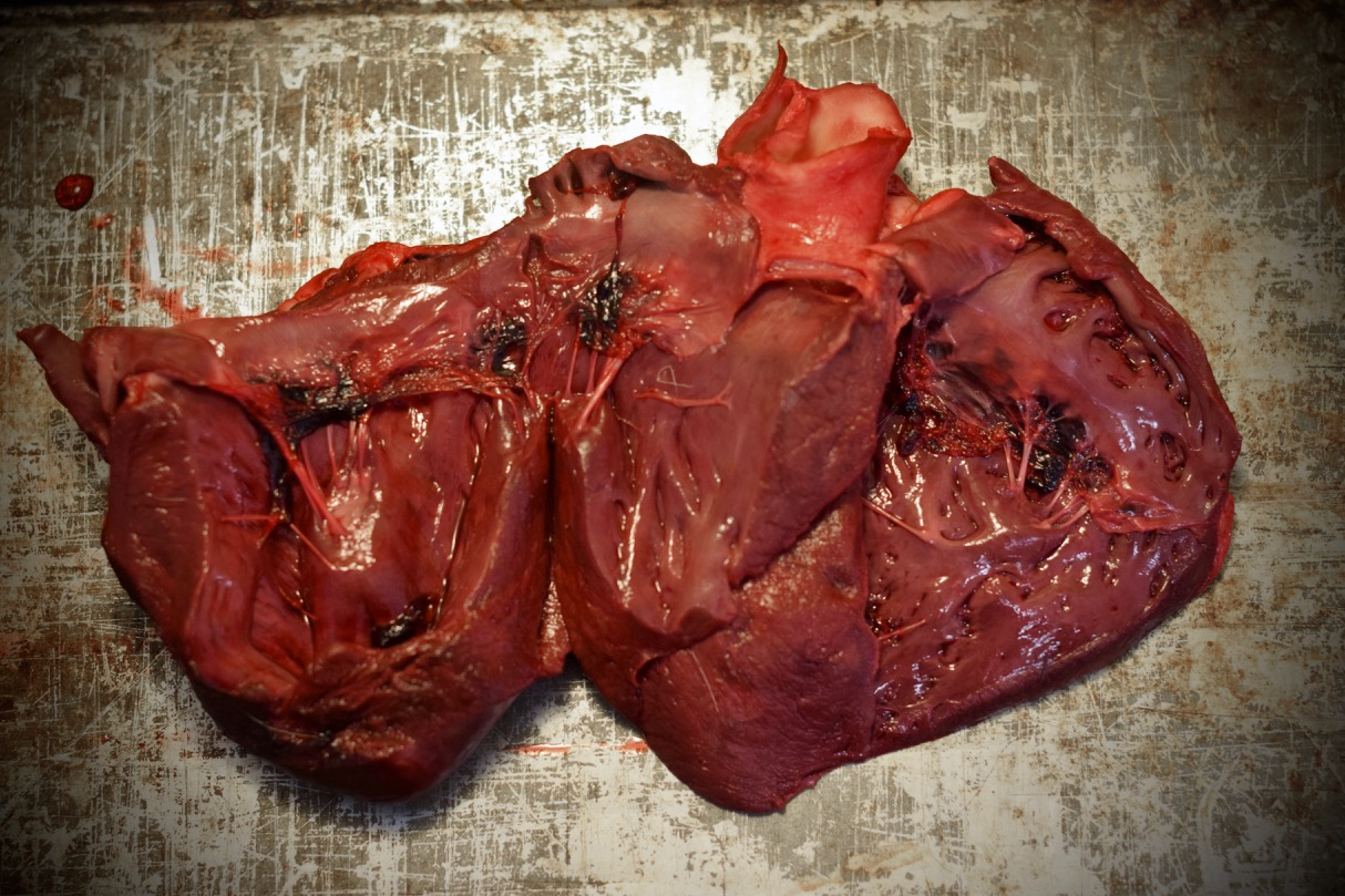 Caribou Heart and Tongue Soup: the heart