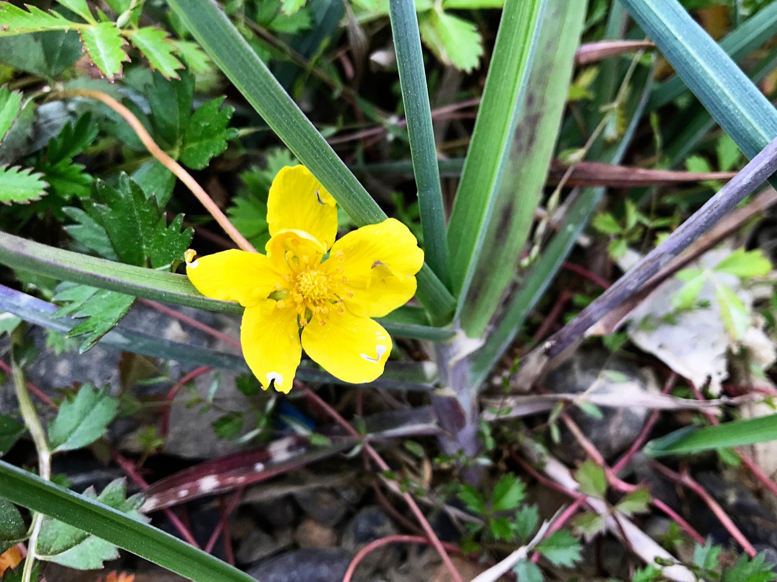 Tundra Flowers Bright Yellow
